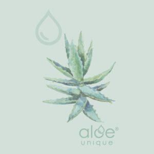 gift vouchers online | Aloe Ferox Skin Products